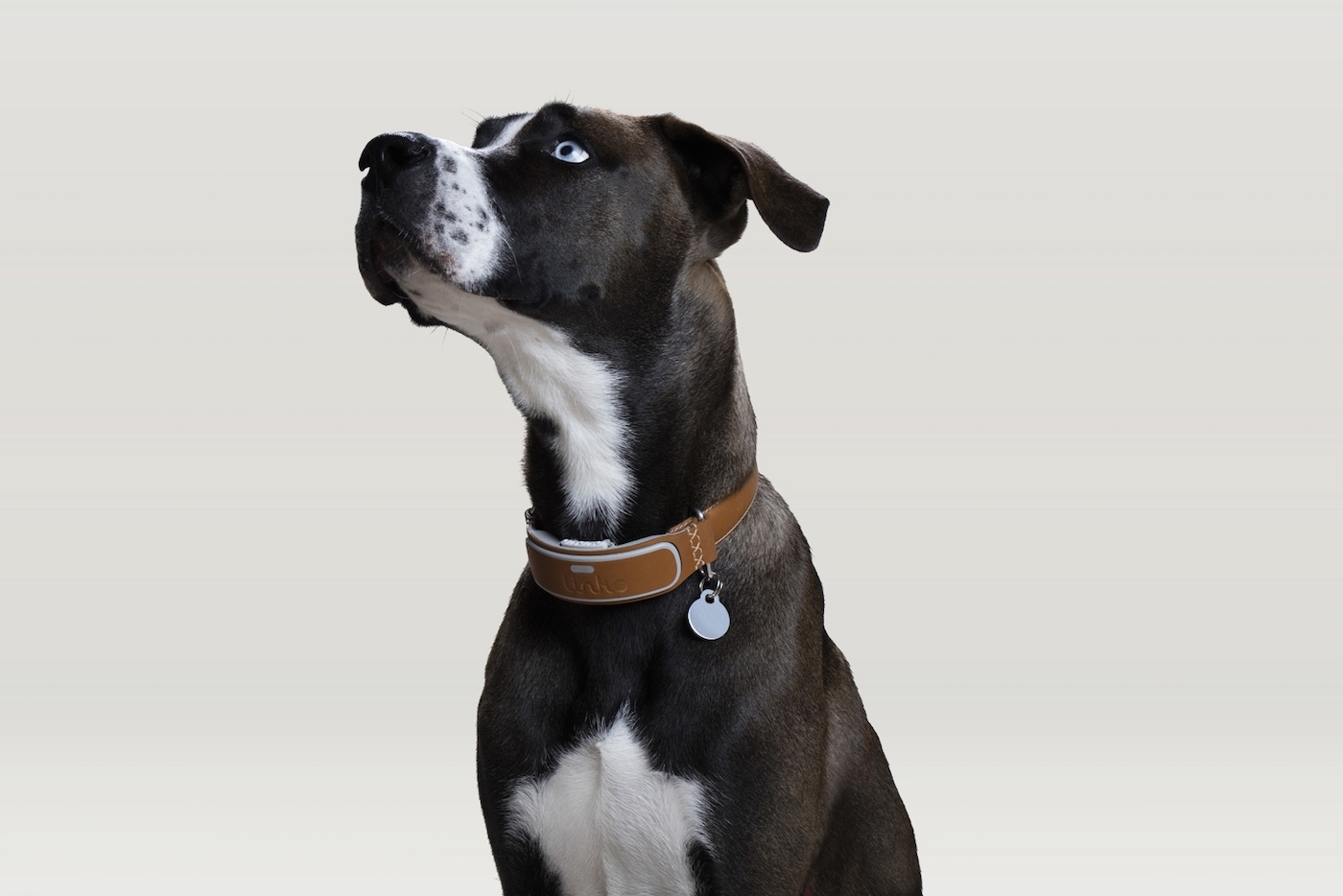 Connected dog collar.