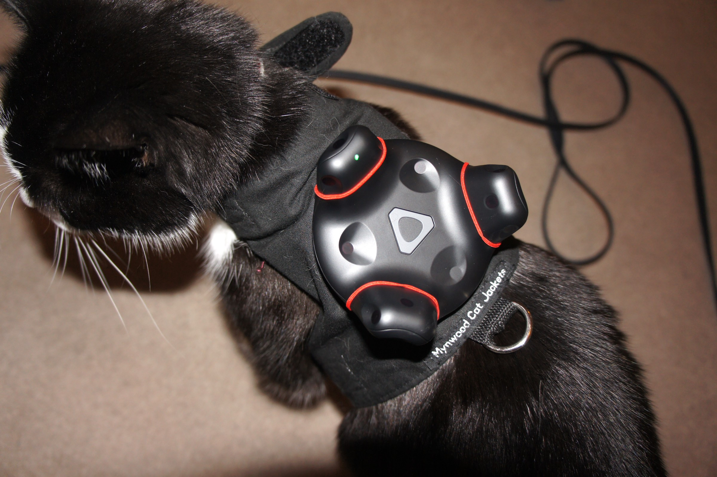 VR Tracked Cat.